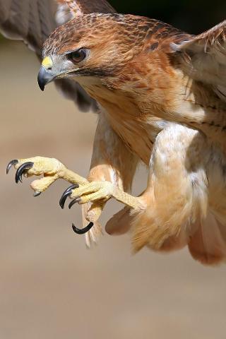 Talons of a hawk