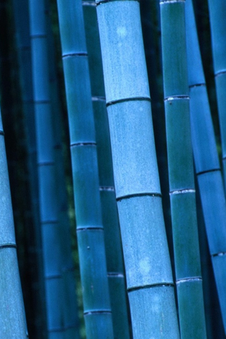 Blue Bamboo iPhone Wallpaper