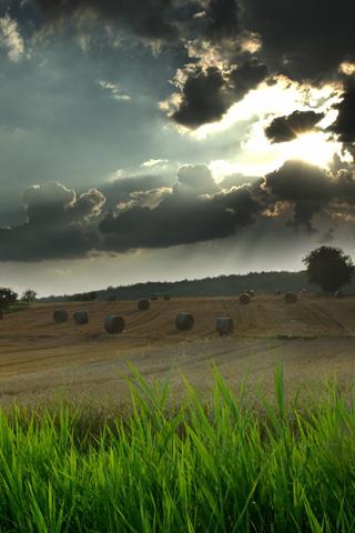 Farmland iPhone Wallpaper
