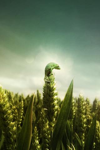 Miniaturized Chameleon iPhone Wallpaper