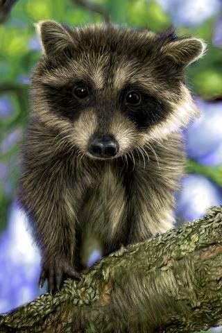 Curious Raccoon iPhone Wallpaper