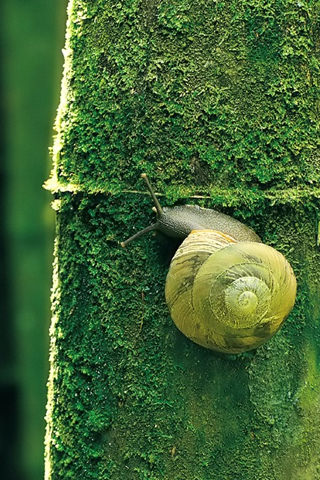 Snail iPhone Wallpaper