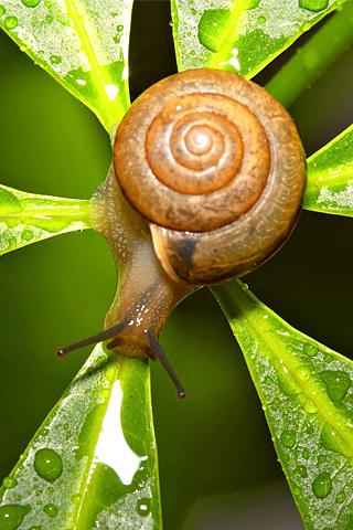 Snail iPhone Wallpaper