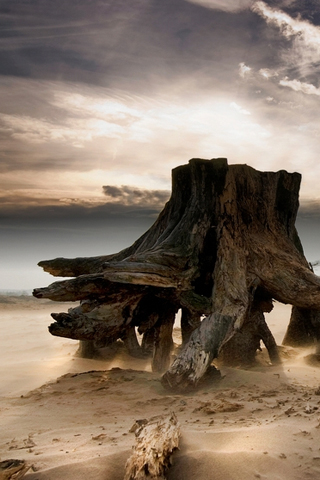 Stumped - Jeanette Oerlemans iPhone Wallpaper