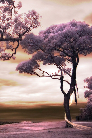 Purple Landscape iPhone Wallpaper