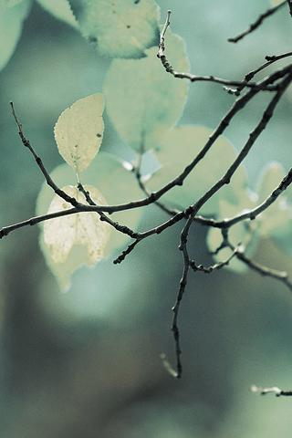 Twigs iPhone Wallpaper