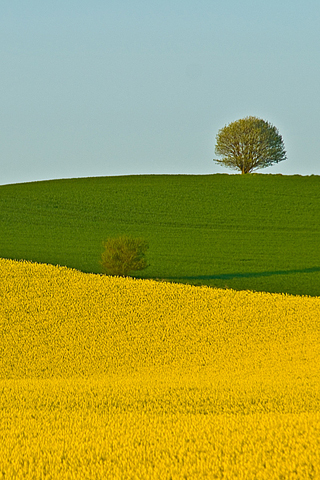 Two Fields - Lars Klottrup iPhone Wallpaper