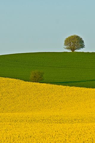 Two Fields - Lars Klottrup iPhone Wallpaper