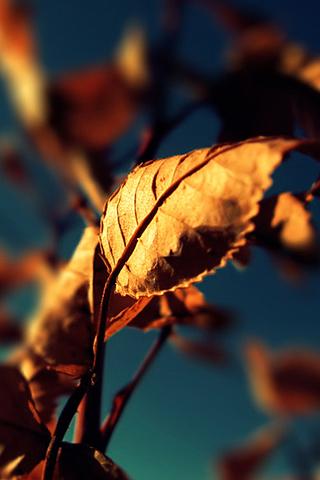 Brown Leaves iPhone Wallpaper