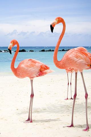 Flamingo Beach iPhone Wallpaper