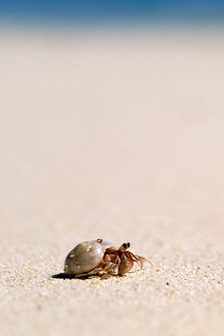 Hermit Crab iPhone Wallpaper