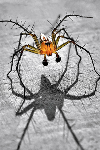 Spider by Irawan Yuwono iPhone Wallpaper