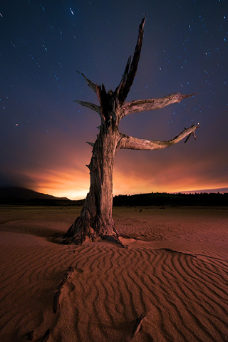 Dead Tree by Philip Perold iPhone Wallpaper