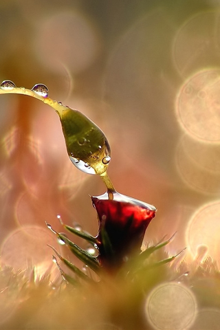 Thirst by Marta Grzesiak iPhone Wallpaper