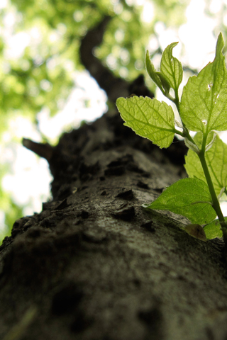 Tree Bark iPhone Wallpaper