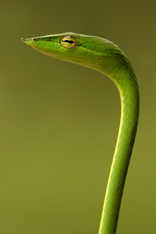 Garden Snake iPhone Wallpaper