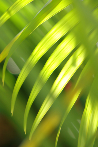 Palm Tree Leaves iPhone Wallpaper