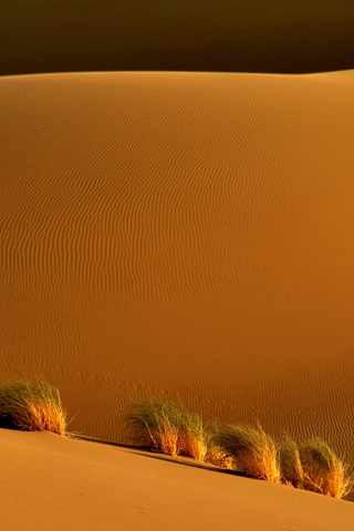 Sand Dunes by Arash Karimi iPhone Wallpaper