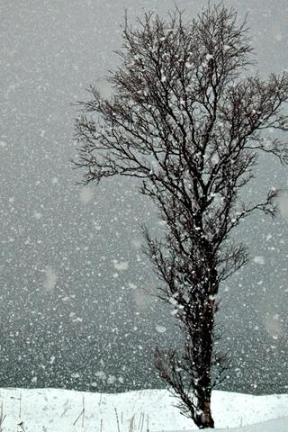 Winter Tree iPhone Wallpaper