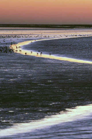 Wadden Island Estuary, Netherlands iPhone Wallpaper