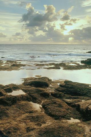 Serene Shore iPhone Wallpaper