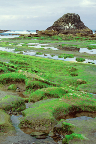 Seal Rock State Park, Oregon iPhone Wallpaper