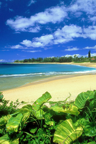 Haena Beach Hawaii IPhone Wallpaper