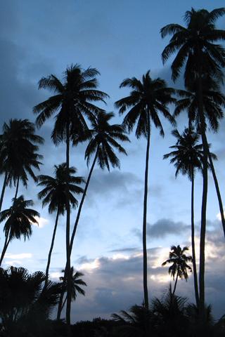Fiji Palm Trees iPhone Wallpaper