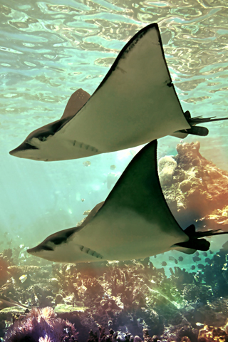 Flying Fish iPhone Wallpaper