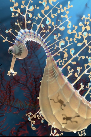 Sea Horse iPhone Wallpaper