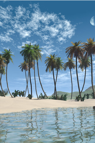 Palm Beach iPhone Wallpaper