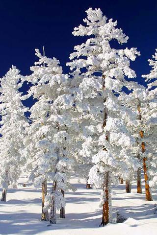 Snowy Tree iPhone Wallpaper