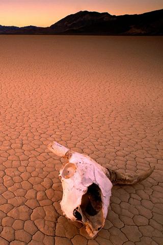 Desert Skull iPhone Wallpaper