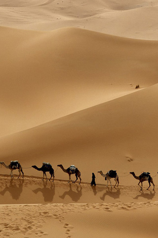 Camels iPhone Wallpaper