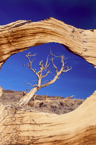 Natural Window iPhone Wallpaper