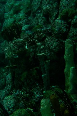 Faded Corals iPhone Wallpaper