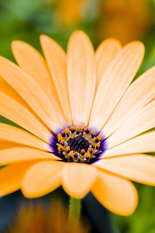 Flower Closeup iPhone Wallpaper