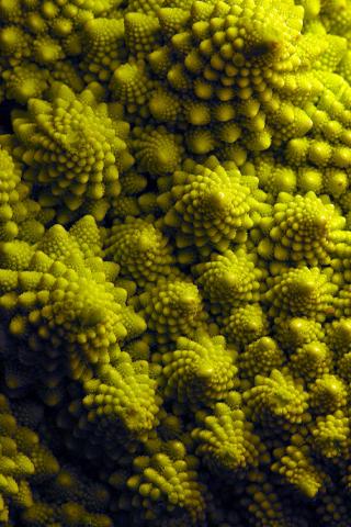 Pinecone Textures iPhone Wallpaper