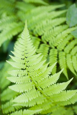 Vertical Plant iPhone Wallpaper