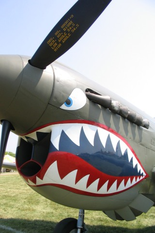 P40 Tigershark iPhone Wallpaper