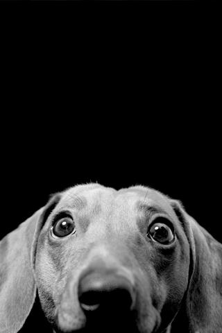 Curious Dog iPhone Wallpaper