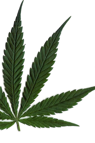 Marijuana Leaf iPhone Wallpaper