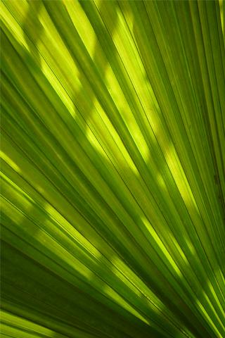 Big Green Leaf iPhone Wallpaper