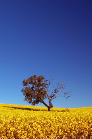 Lonely Yellow Tree iPhone Wallpaper