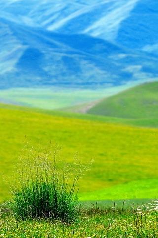 Distant Grass Field iPhone Wallpaper