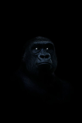 Dark Gorilla iPhone Wallpaper