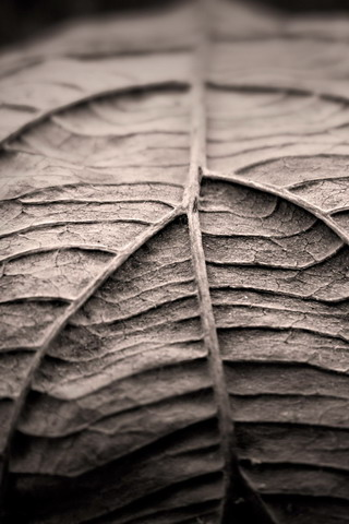Dry Leaf Closeup iPhone Wallpaper