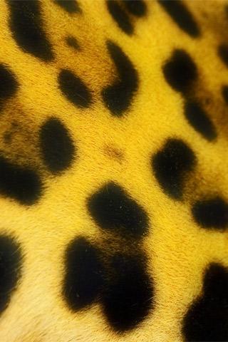 Leopard Pattern Closeup iPhone Wallpaper