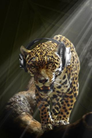 Leopard Wearing Headphones iPhone Wallpaper