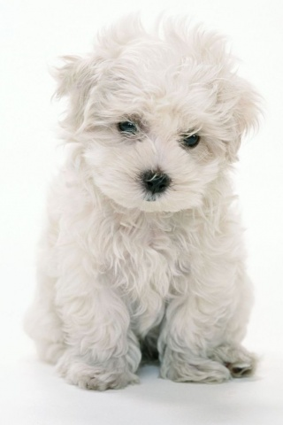 wallpaper puppies. iPhone wallpapers and iPod